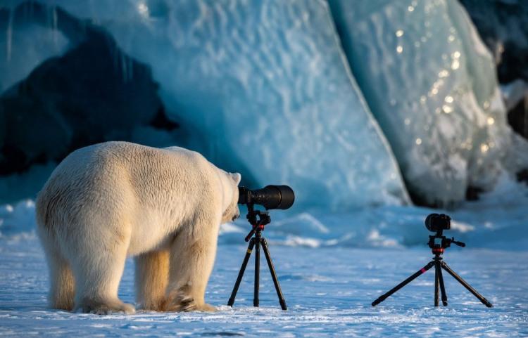 Фото прикол  про ведмедів та фотоапарати