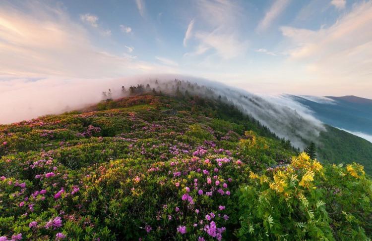 Фото прикол  про гори, туман та природу