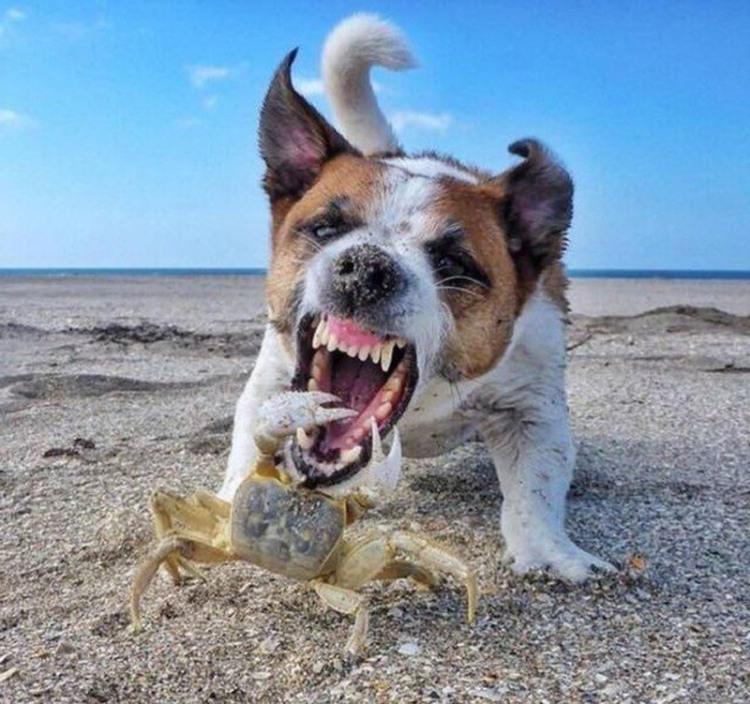 Фото прикол  про собак та крабів
