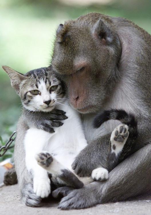 Фото прикол  про мавп та котів