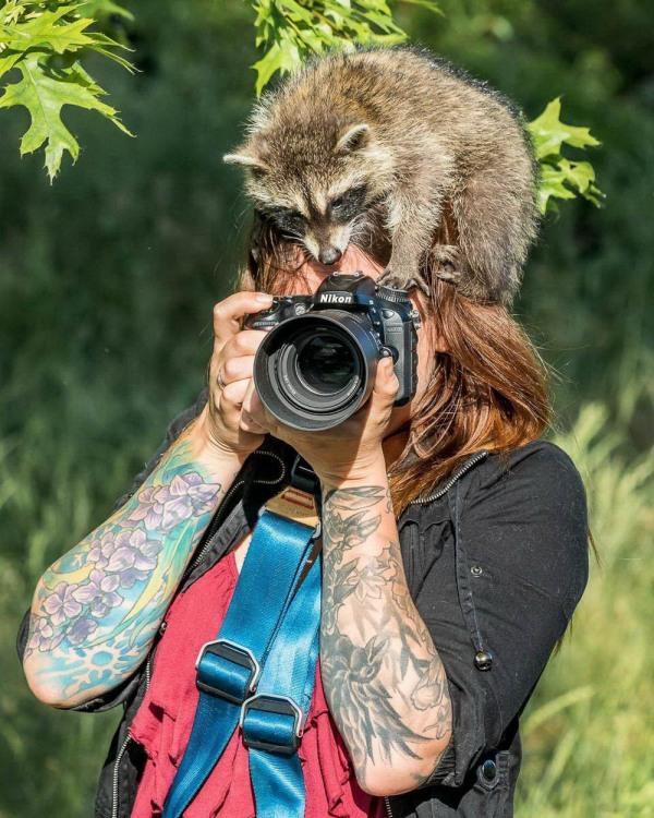 Фото прикол  про єнотів та фотографів