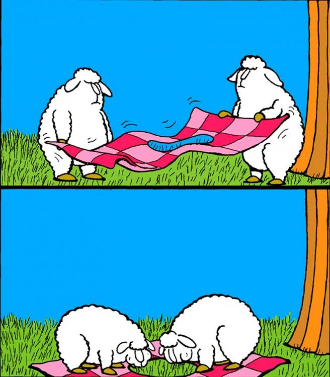 Малюнок  про овець