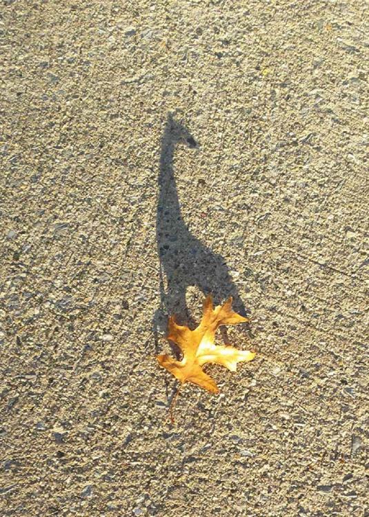 Фото прикол  про листя, тінь гра уяви