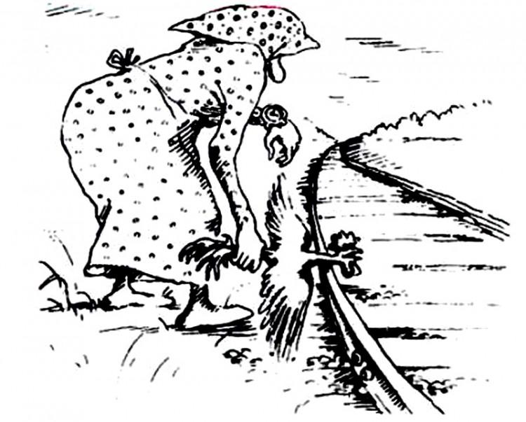 Малюнок  про півня, чорний журнал перець
