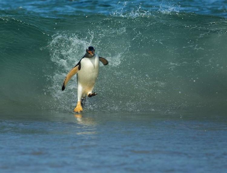 Фото прикол  про пінгвінів