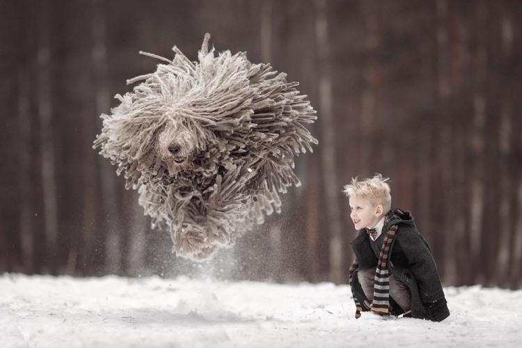 Фото прикол  про собак та стрибки