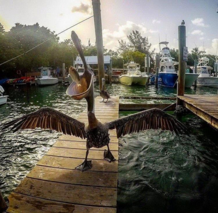 Фото прикол  про птахів та рибу