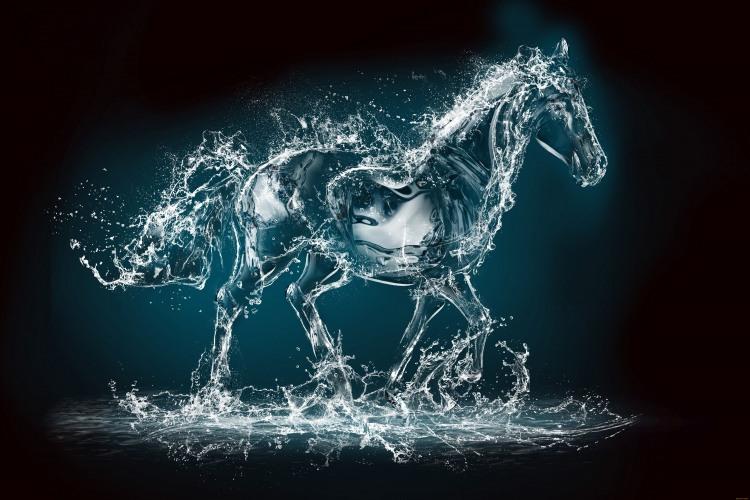 Фото прикол  про коней та воду