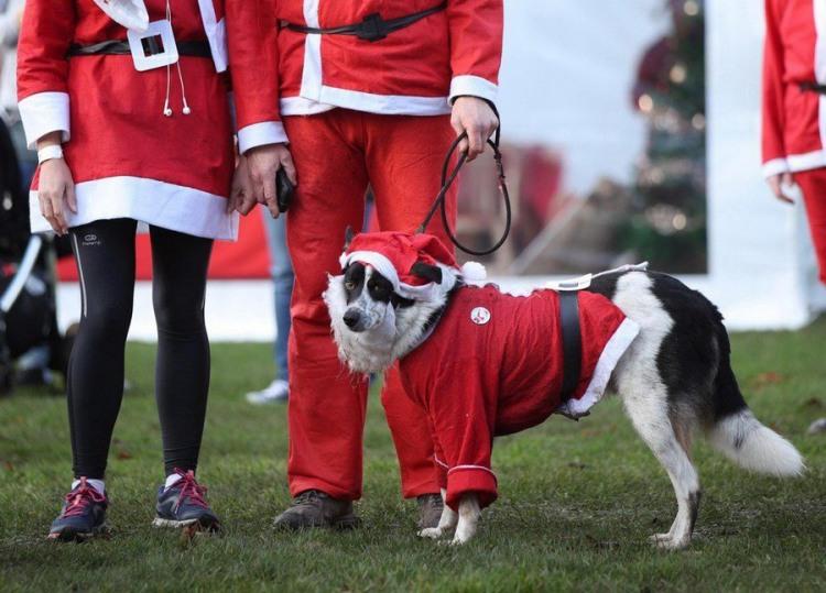 Фото прикол  про новий рік та собак