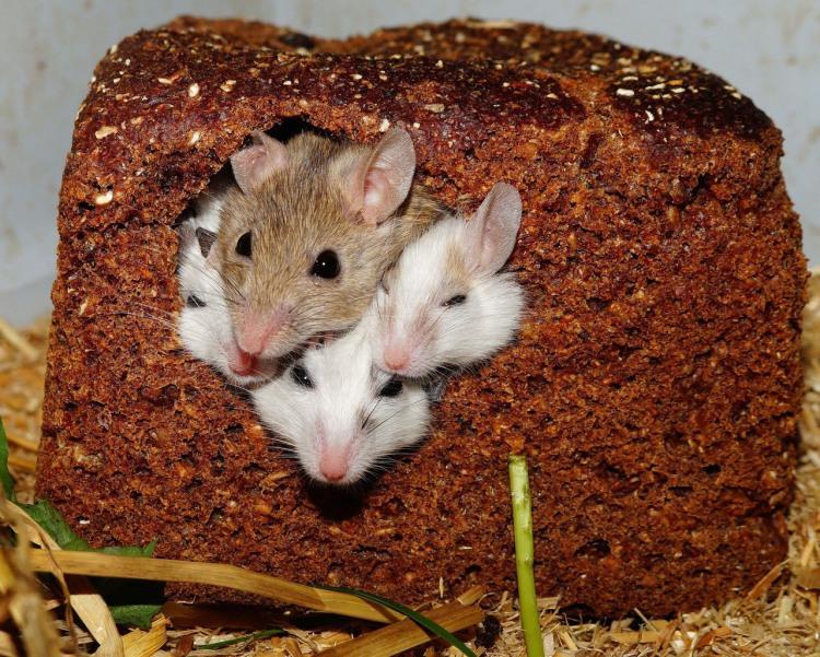 Фото прикол  про мишей та хліб