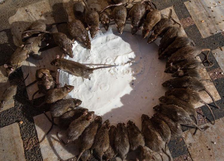 Фото прикол  про щурів