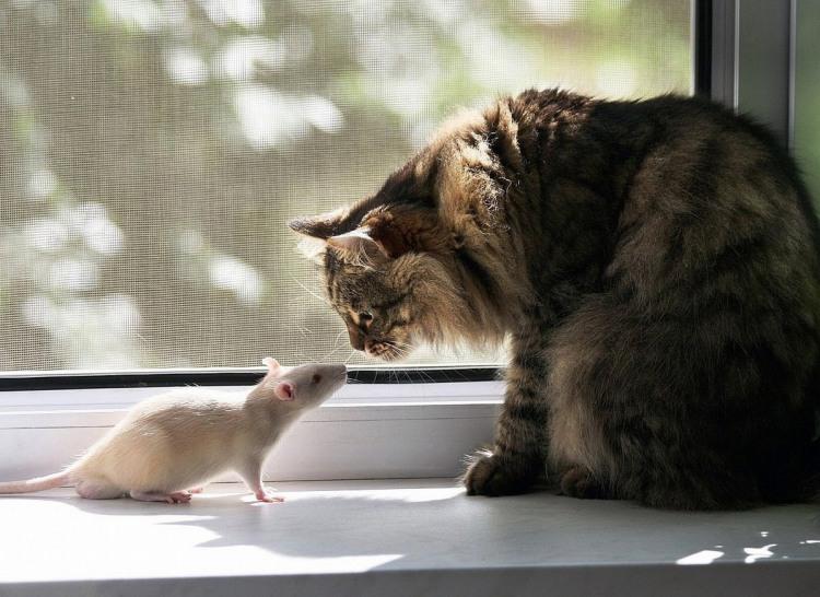 Фото прикол  про щурів та котів