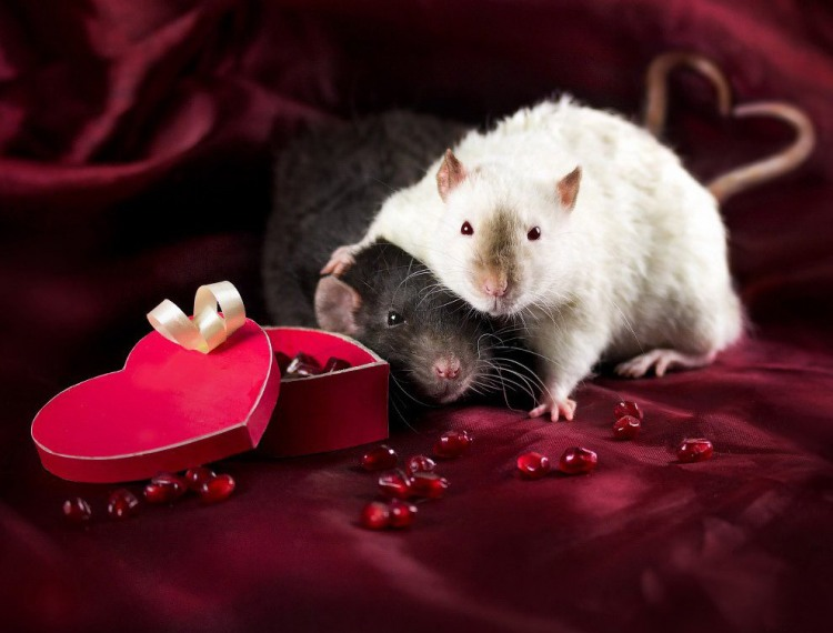 Фото прикол  про щурів та романтику