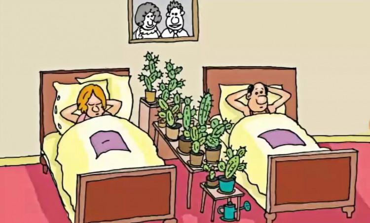 Малюнок  про чоловіка, дружину, кактус та стіну