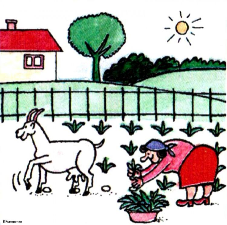 Малюнок  про козу, город журнал перець