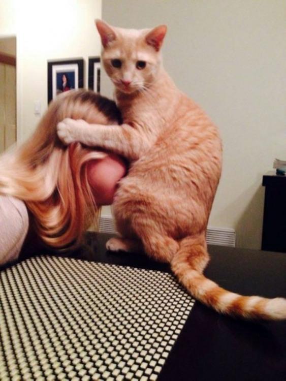 Фото прикол  про котів та дівчат