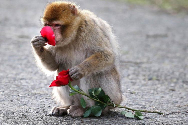 Фото прикол  про мавп та квіти