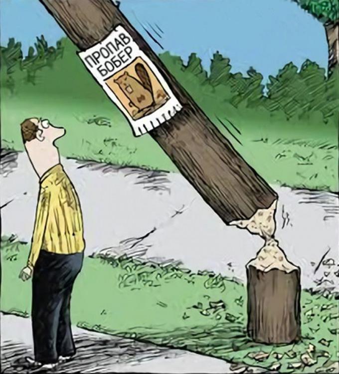 Малюнок  про бобрів оголошення