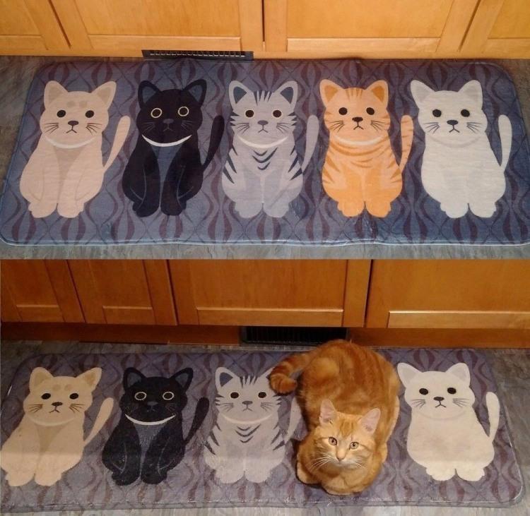 Фото прикол  про котів та килим