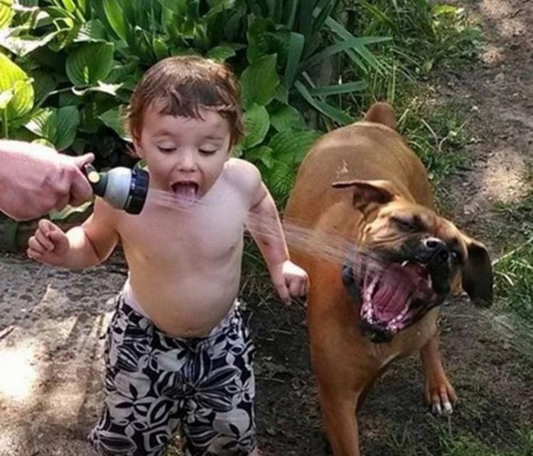 Фото прикол  про дітей, собак та воду