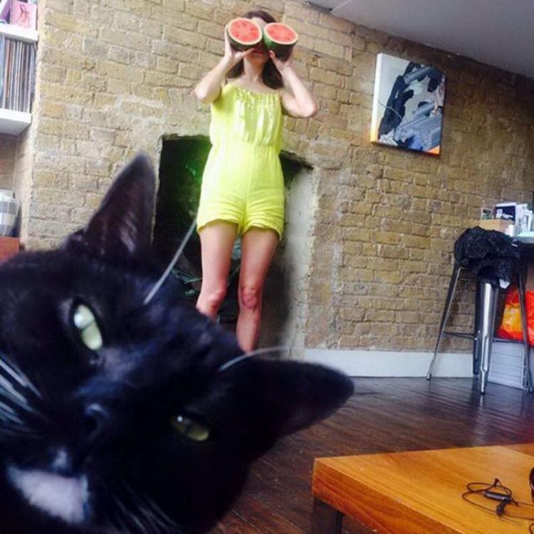Фото прикол  про дівчат, кавун та котів
