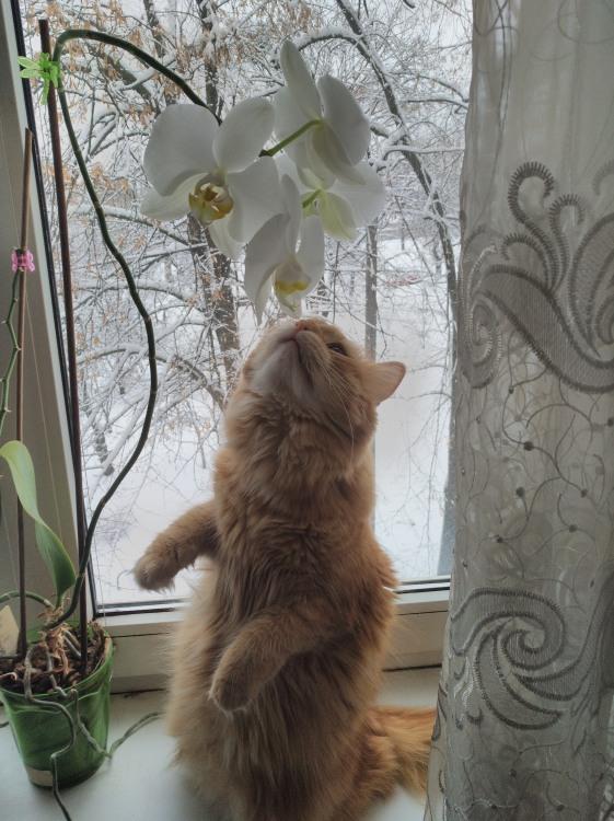 Фото прикол  про котів та квіти