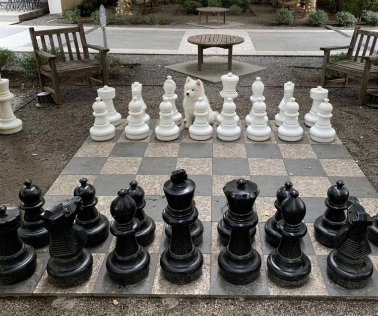 Фото прикол  про шахи та собак