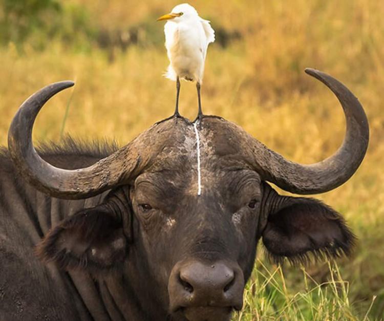 Фото прикол  про птахів, кал огидний