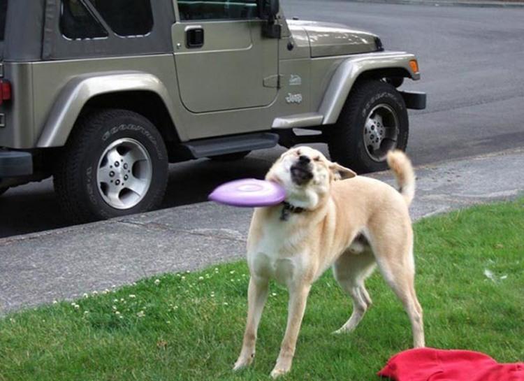 Фото прикол  про собак та тарілки