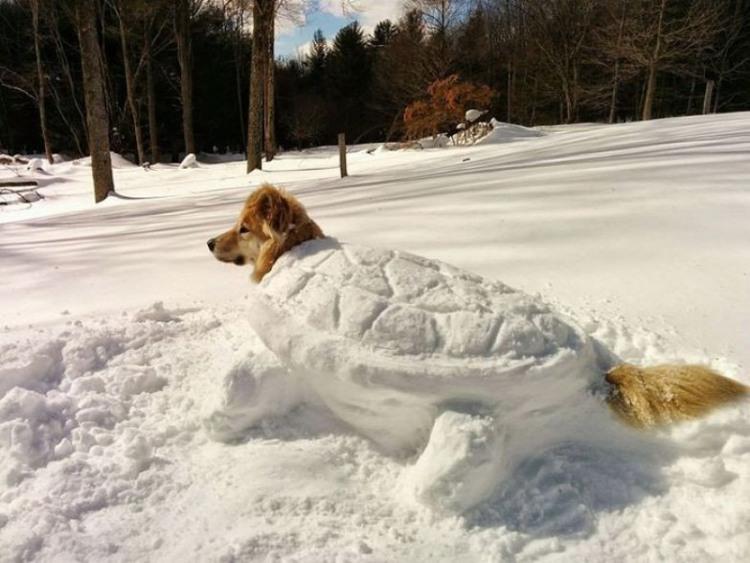 Фото прикол  про собак та сніг