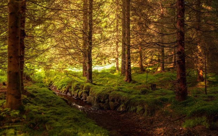 Фото прикол  про мохи та ліс