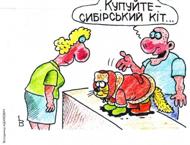 Малюнок  про котів журнал перець