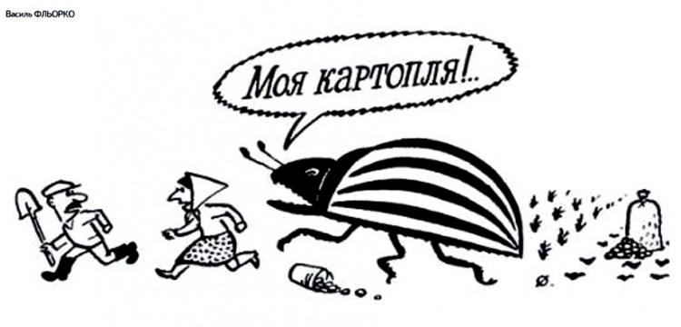 Малюнок  про колорадського жука, картоплю журнал перець