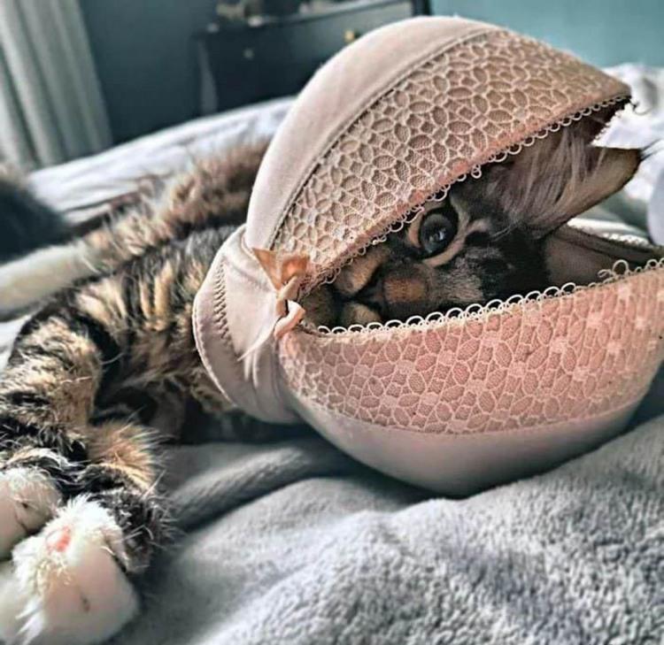 Фото прикол  про бюстгальтер та котів