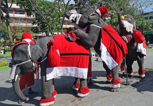 Фото прикол  про слонів та новий рік