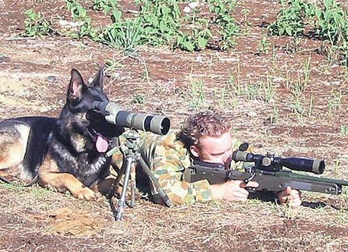 Фото прикол  про собак та снайпера