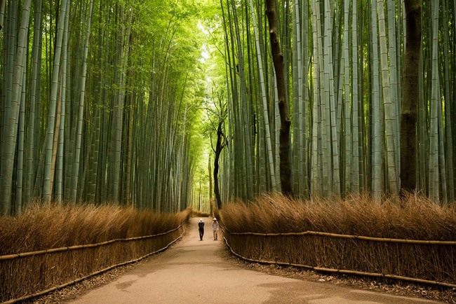 Фото прикол  про бамбук