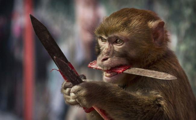 Фото прикол  про мавп та ніж