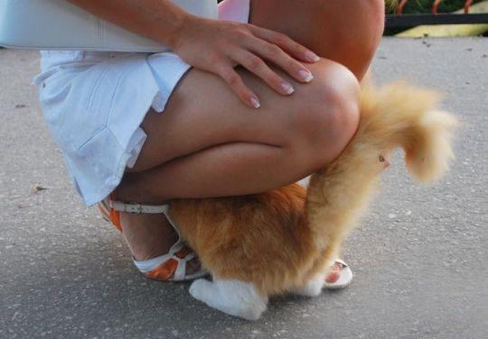 Фото прикол  про котів вульгарний
