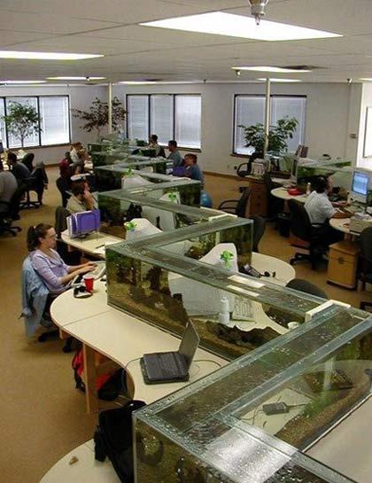 Фото прикол  про акваріум та офіс