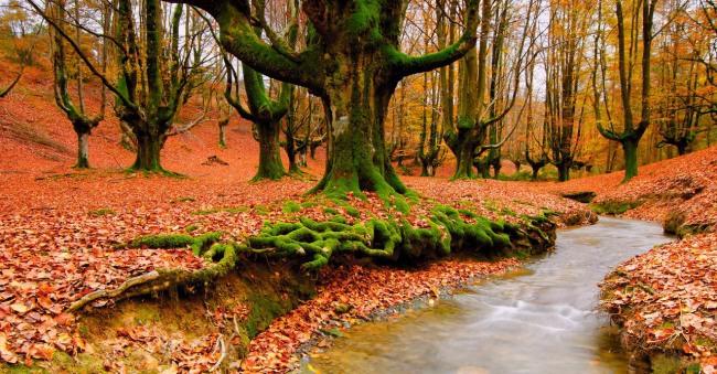 Фото прикол  про осінь та ліс