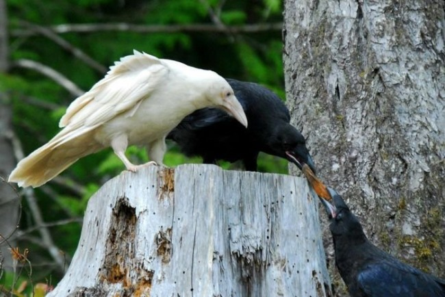 Фото прикол  про ворону