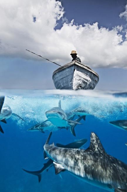 Фото прикол  про риболовлю та акул