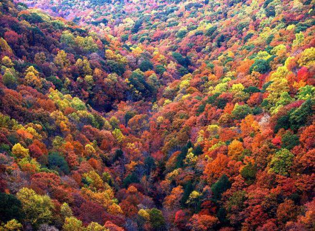Фото прикол  про ліс та осінь