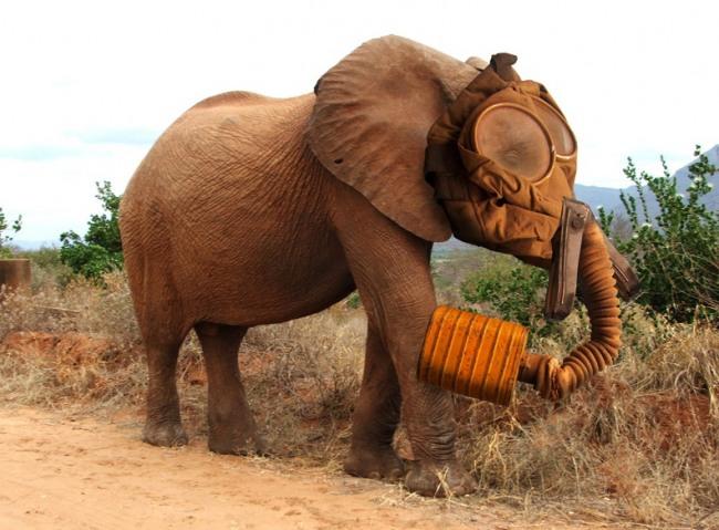 Фото прикол  про слонів та протигаз