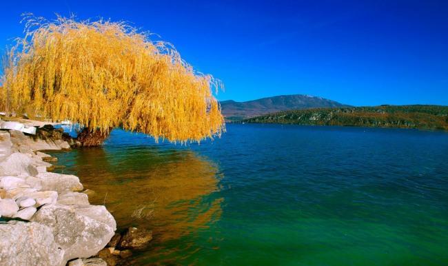 Фото прикол  про дерево та осінь