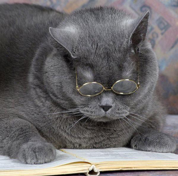 Сделать, прикольные открытки про кошек