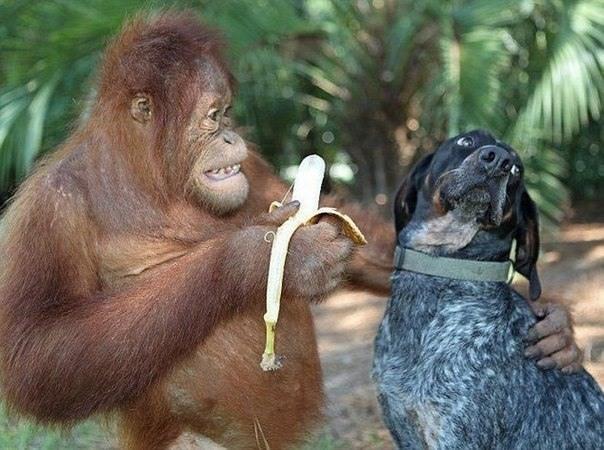 Фото прикол  про мавп та собак