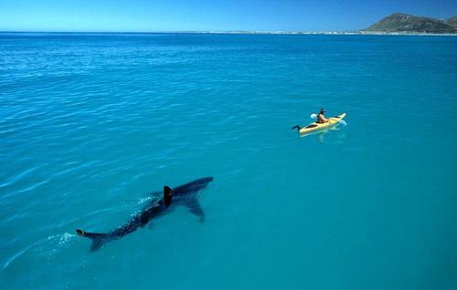 Фото прикол  про акул чорний