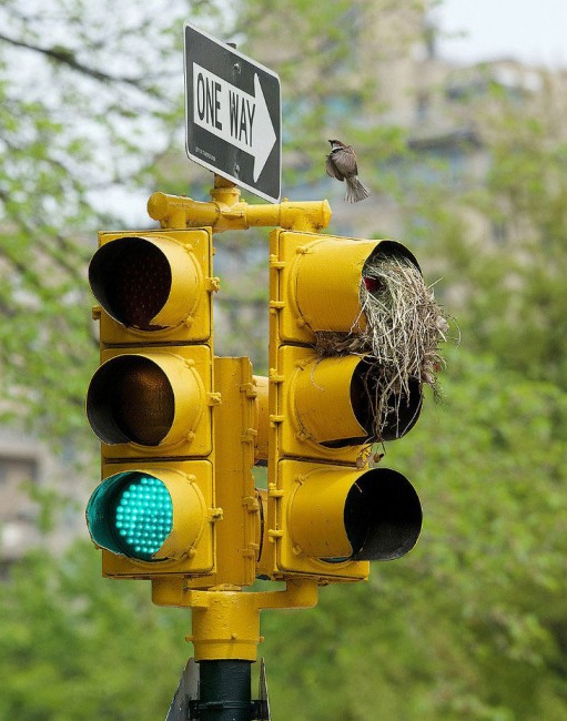 Фото прикол  про світлофор та птахів